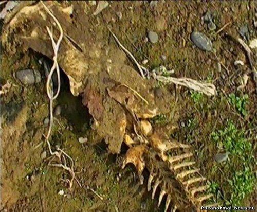 В Имишли обнаружен скелет неизвестного животного