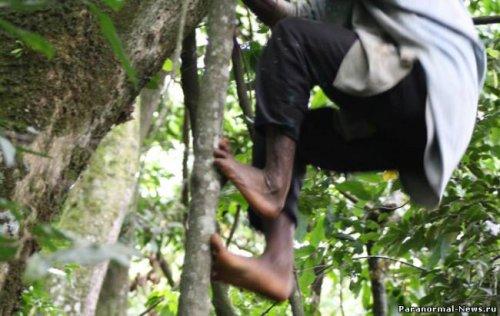 Племя с ногами шимпанзе