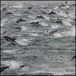 Дельфины сошли с ума