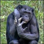 Как минимум в 6 фрагментах генома человек и шимпанзе имеют одинаковые комбинации генетических вариантов