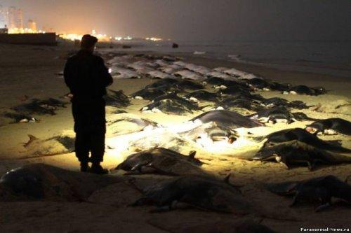 Массовая гибель скатов на побережье Сектора Газа