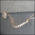 В Вахшской долине найден скелет существа, похожего на динозавра