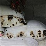 Огненный полтергейст сжег подушки и одеяла