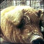 Шокирующие результаты кормления животных ГМ-продуктами
