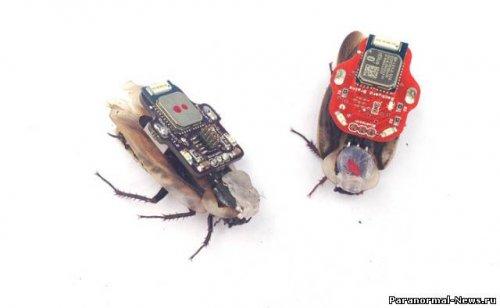 Живой таракан с дистанционным управлением