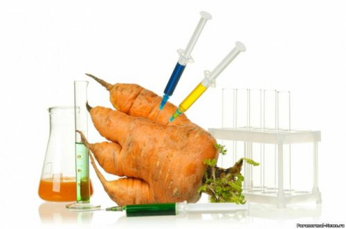 ГМО вызывают анемию и лейкоз