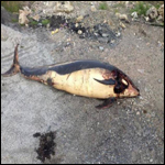 На ирландской горе  найден живой детеныш кита