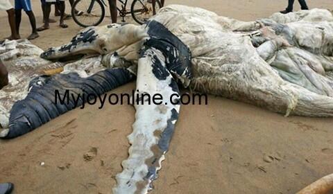 На пляж Ганы выбросило странные останки
