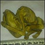 В Иране найден засохший эмбрион с вытянутым черепом. Ребенок-гибрид?
