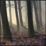 Гиблые места в подмосковных лесах