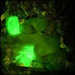 Ученые вывели светящихся в темноте кроликов