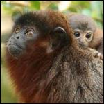 Новые виды растений и животных обнаружили в бассейне Амазонки