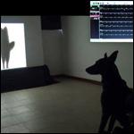 Собаки научились понимать сородичей по направлению виляния хвоста