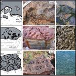 Ученые нашли древнейшие окаменелые организмы