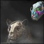 Предки леопардов оказались родом из Тибета