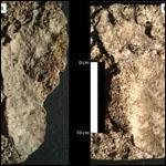 Антропологи нашли древнейшие следы человека в Северной Америке