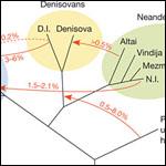 Генетики прочитали геном неандертальца с Алтая