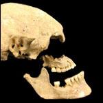 Предков европейцев разделили на три популяции