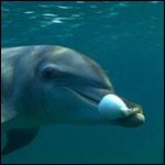 Зоологи нашли у дельфинов наркотики