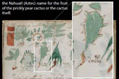 Ботаники определили растения из «самого загадочного манускрипта»