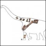 В Китае нашли новый вид титанозавров