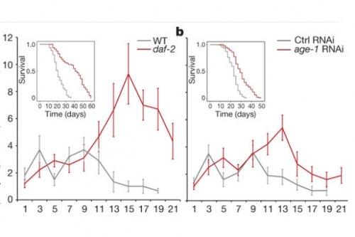 Продолжительность жизни научились предсказывать по митохондриям