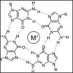 «Болезнь Хокинга» объяснили появлением четырехспиральной ДНК