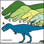 В Арктике нашли карликового тираннозавра
