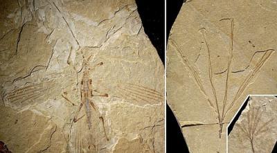 Как только появились первые цветы, насекомые немедленно стали под них маскироваться, спасаясь от динозавров и первых птиц.