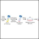 В исследовании по получению стволовых клеток с помощью кислоты нашли подделки