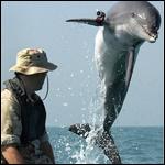 Боевые дельфины США поучаствуют в учениях на Черном море