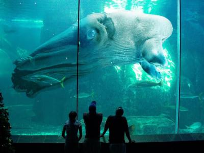 Кракен - охотник на кашалотов и китов