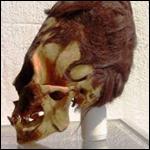 Ученые проанализировали ДНК удлиненных черепов