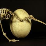 Биологи нашли неожиданного родственника киви