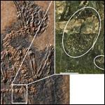 Ученые нашли самую древнюю птицу-опылителя