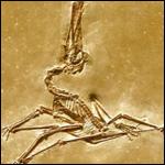 Колония древних птеродактилей обнаружена в Китае