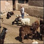 В Киргизии организовали охоту на чупакабру
