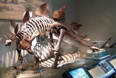 Биологи посчитали динозавров мезотермическими животными
