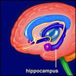 Нейрофизиологи определили точное местоположение воспоминаний