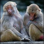 Животные предпочли скрывать свои болезни от детенышей и партнеров