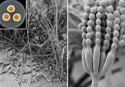 10 новых видов растений и животных, открытых в 2014