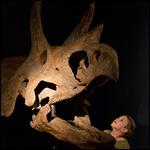 Ученые проследили за эволюцией трицератопса