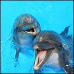 К речи дельфинов найден ключ