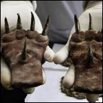 Странные когти нашли археологи в Перу