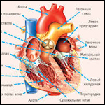 Мать инстинктивно узнала человека, которому пересадили сердце её сына