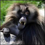 Аристократию бабуинов создали сестры и матери