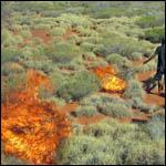 Ученые доказали пользу устраиваемых австралийскими аборигенами пожаров