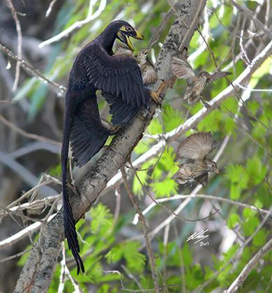 Превратиться в птиц динозаврам помог маленький размер