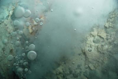 Ученые раскрыли тайну предка всех живых организмов