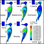 Китайские физики объяснили ударопрочность головы дятлов